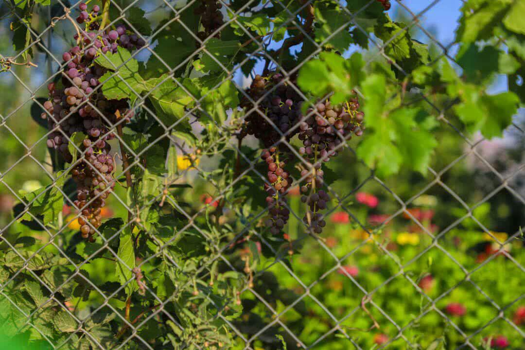 photo_2020-08-11_09-58-12