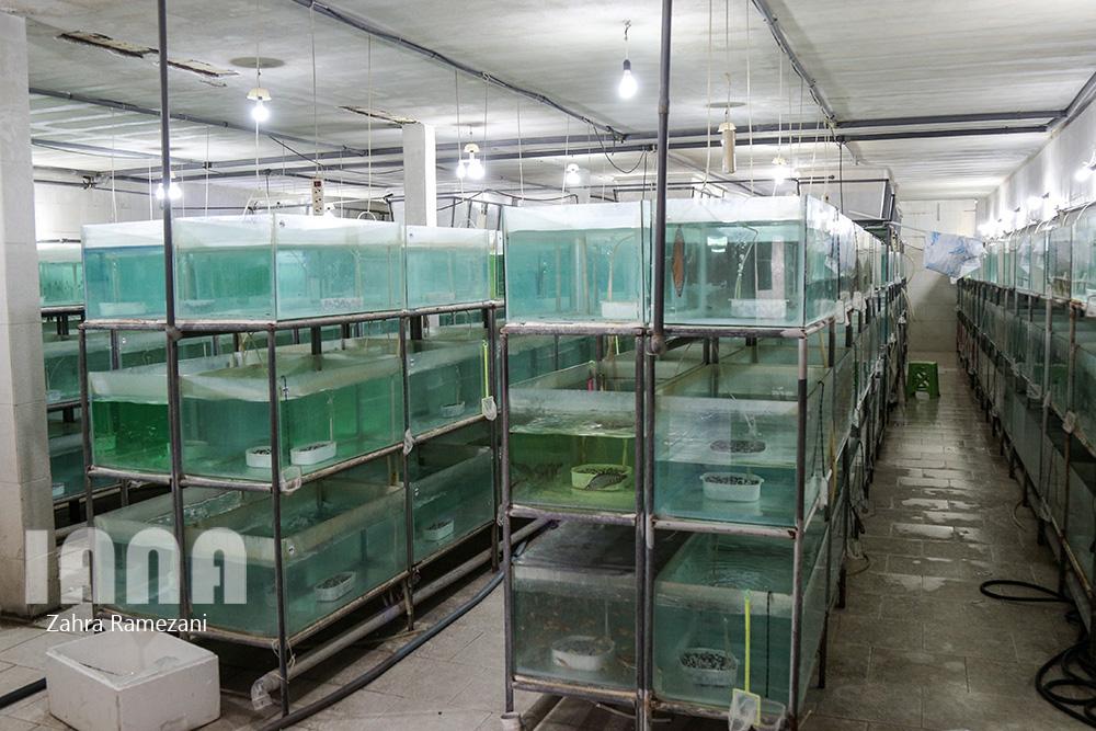 پرورش ماهی های زینتی صادراتی