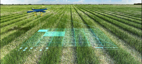نقش مهم هوش مصنوعی در پروسه مزرعه تا چنگال
