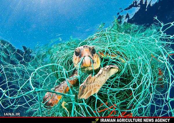 تاثیرات زبالههای پلاستیکی بر اقیانوسها