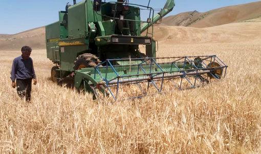 آغاز برداشت محصول گندم و جو در مزارع شهرستان کلیبـر
