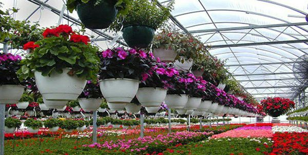 تولید سالانه ۲۳ میلیون شاخه گل در لرستان