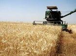 ۱۸ هزار تن گندم از کشاورزان چرداول خریداری شد