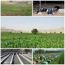 ۷۶۳ طرح کشاورزی و دامپروری در خراسان شمالی اجرا شد
