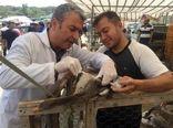 با عرضهکنندگان مرغ زنده برخورد میشود