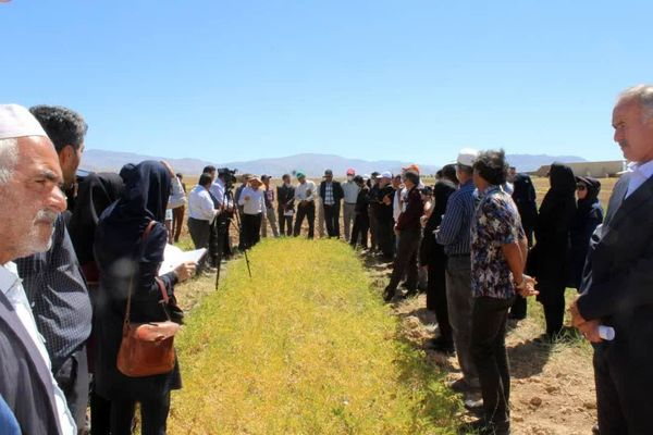 روز مزرعه نخود با عنوان کشت رقم گوکسو در خراسان شمالی برگزار شد
