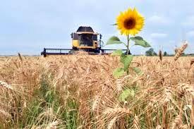 قیمت هر کیلوگرم گندم در اوکراین بیش از ۲۲۰۰ تومان