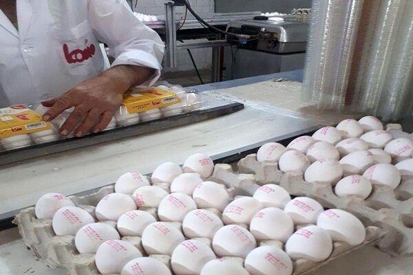 روزانه ۱۸۰ تن تخم مرغ مازارد بر نیاز در اصفهان تولید میشود