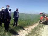 سمپاشی 6200 هکتار از مزارع غلات شهرستان هشترود  علیه آفت سن مادر