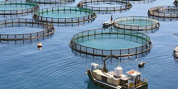 پرورش ماهی در قفس؛ چشم انتظار حمایت مسوولان برای صادراتی شدن