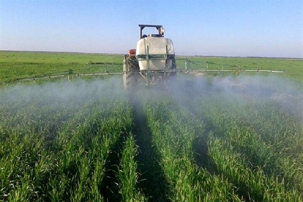 کشاورزان مبارزه با آفات گندم را جدی بگیرند