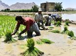 آب اصفهان، پاسخگوی کاشت برنج نیست