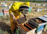 خام فروشی به صادرات عسل هم رسید
