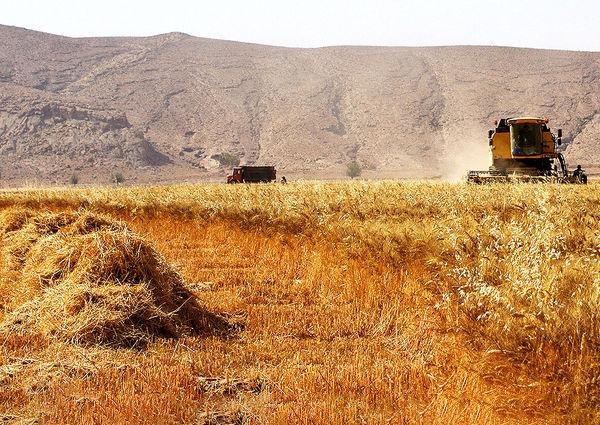 تعیین قیمت گندم در پاکستان ۴۰ درصد بیشتر از نرخ جهانی