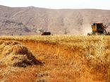 58 هزار و 742 میلیارد ریال به گندمکاران پرداخت شد