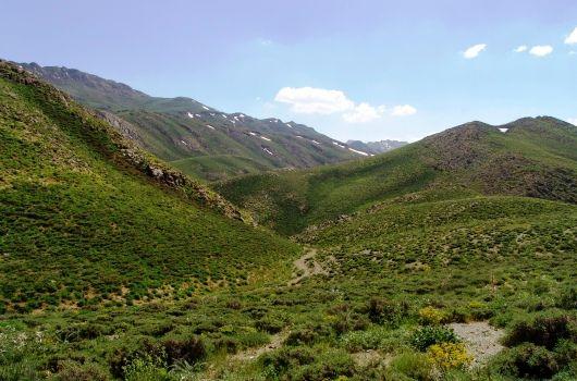 ۱۰۰ میلیارد تومان برای احیای مراتع و جنگل ها
