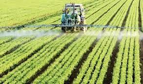 انجام کشت قراردادی در خراسان شمالی در دستور کار سازمان جهاد کشاورزی