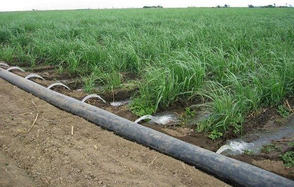 آبیاری در زمان مناسب، مصرف آب کشاورزی را کاهش میدهد