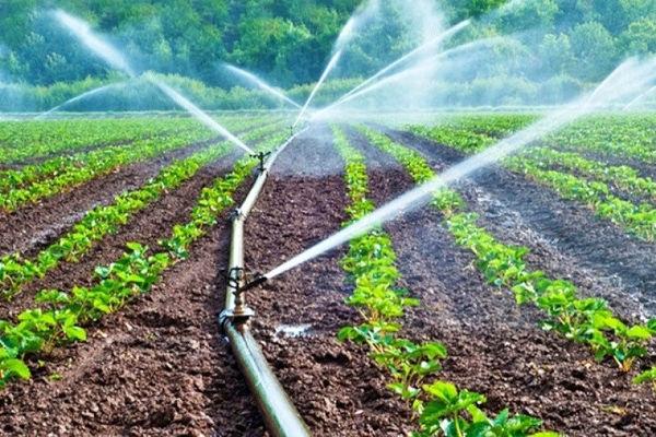 رشد 16درصدی بازدهی مصرف آب کشاورزی در خراسان شمالی