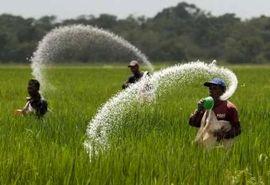 مدیر جهاد کشاورزی بیجار: کمبود کود نداریم
