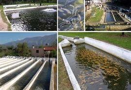 تاثیر تغییر اقلیم بر وقوع بیماریها در آبزیان