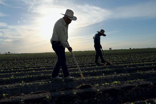 کشاورزان آمریکایی فقیرتر شدهاند