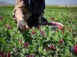کشت بیش از 105 هکتار انواع گیاهان دارویی