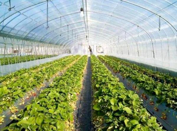 اجرای طرح ملی احداث گلخانههای کوچک مقیاس