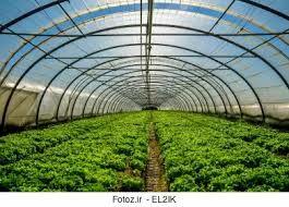 تولید ۱۳ هزار تن محصول گلخانهای در خراسان شمالی