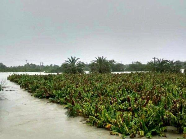 برآورد خسارت 1 هزار میلیارد تومانی سیل به بخش کشاورزی سه استان جنوبی کشور