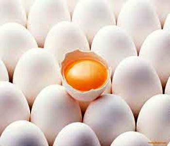27000 تن تخم مرغ در مرغدارهای  شهرستان آبیک تولید شد