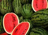 برداشت هندوانه از مزارع رستم در حال انجام است