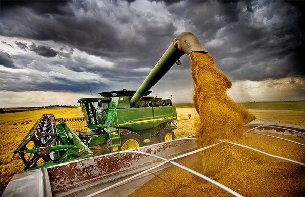 خرید تضمینی 825 هزار تن گندم مازاد بر نیاز کشاورزان