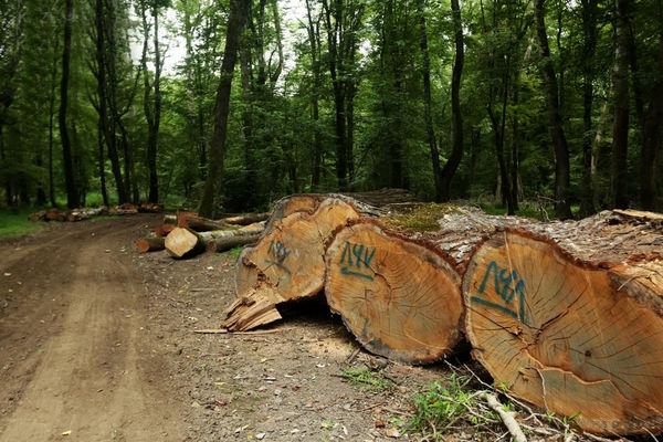 جنگلهای هیرکانی زیر ضرب جاده جدید شمال