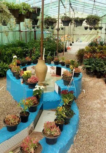 اشتغال زایی با پرورش گیاهان زینتی توسط بانوی کارآفرین در استان فارس