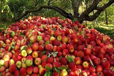آذربایجان غربی، قطب اول سیب درختی ایران