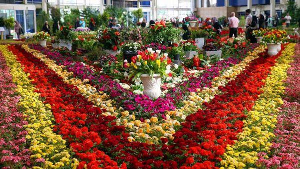 تولید 4 میلیارد و ۷۰۰ شاخه گل در سال 1400