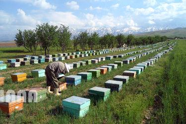 زنبورداری