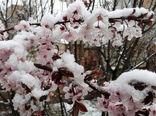 خسارت 400میلیاردی سرمای دیررس بهاره به باغات مزارع و مراکز دامی