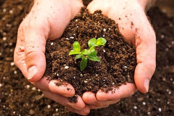 مدیریت پایدار خاک اولویت بخش کشاورزی است