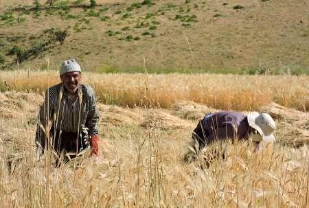 نرخگذاری محصولات توسط واسطهها چالش جدی بخش کشاورزی است