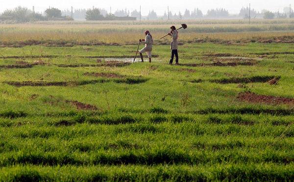 کشاورزی سنتی، در انتهای جدول کارآفرینی