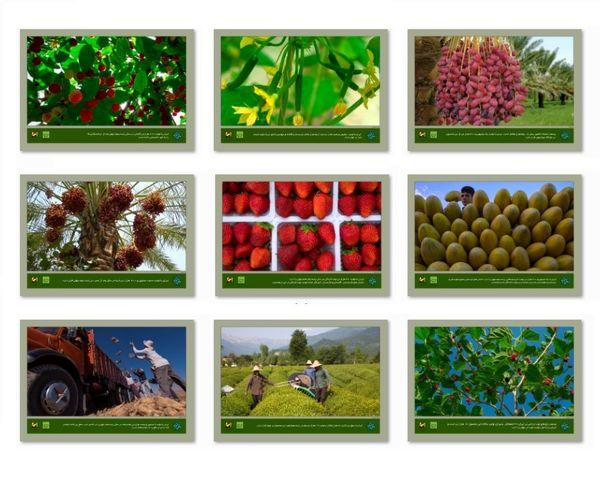 برگزاری نمایشگاه عکس «میوه ایرانی» در مترو