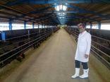 بازدید معاون بهبود تولیدات دامی سازمان جهاد کشاورزی استان قزوین از یک واحد پرورش بز مورسیا