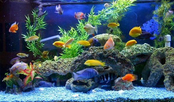 تکثیر و پرورش ماهیان زینتی فرصتی مناسب و زودبازده برای سرمایه گذاری