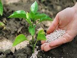 توزیع ۶ هزار و ۳۵۴ تن انواع کودهای شیمیایی بین کشاورزان خراسان شمالی
