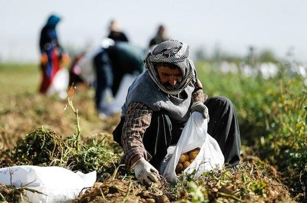مخالفت تعاونیهای کشاورزی با انحلال سازمان مرکزی تعاون روستایی