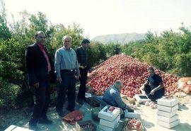 انتخاب 12 کشاورز نمونه از شهرستان ابرکوه