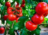 سطح زیر کشت محصولات گلخانه ای در شهرستان شهرکرد روبه افزایش است