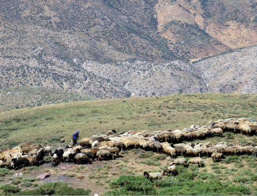 کرونا، کوچ بهاره عشایر خراسان شمالی را به تاخیر انداخت